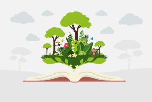 Regenwald Wissen